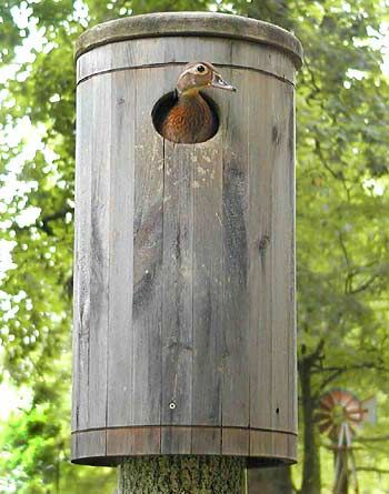 Wood Duck House Attracting Birds To Area Pinterest