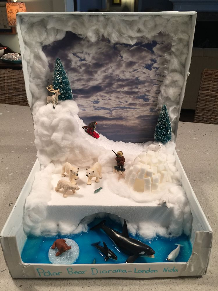diorama project Biome-in-a-box diorama project category 50 40 30 20 attractiveness and creativity diorama is very attractive and creativity is evident.