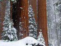 snowy things