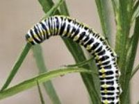 Garden Pests and Organic, sustainable solutions to the problems they bring....