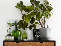 Plants for your home