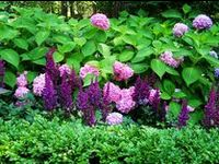 Garden - Plants!