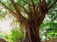 Gorgeous Trees of all Sizes & Shapes; and Stunning Forests & Jungles... Enjoy!! :)