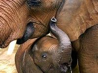 Animal Moms & Dads & Their Babies
