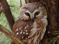 Owls Are Ostentatious