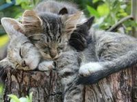 Cute Creatures & Such
