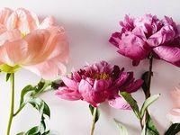 -{ bloom }-