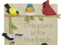 Beautiful, Colorful Birds!