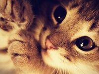 Cute Things <3