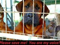 Animal Rescue & Other Causes