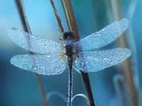 Butterfly's, Dragonfly's & Wings....
