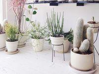 I refuse to kill my plants