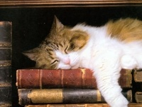 My favorite places for books are anywhere I find them. Libraries, Book Stores, estate sales Stacks, Piles, Cases & Shelves. or anyplace else.