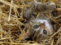 Kitty Kats!