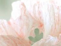 Happy May Day!  Flower DIYs