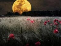 Moons''Luas