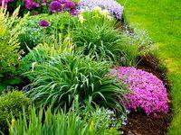 #home #landscape #yard #backyard #garden #outdoors #outside #design #plants #flowers #landscaping #home #gardening