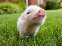 Awe...how cute :)