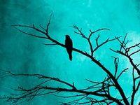 ART ~ Blackbird/Raven