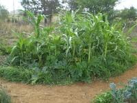 Gardening (Urban Farming)