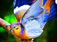 Birds, Beautiful Birds!!!