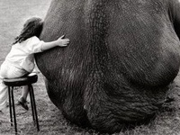 FUN ANIMALS I LOVE