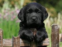 DOG:  Arrows world