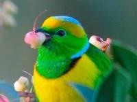 Bird|Feather|Nest|Egg