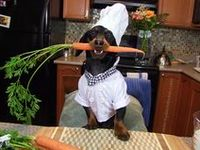 Cooking for Pets