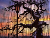 Each tree and plant has its own gifts, talents, and abilities to share.I love to lean against a tree to re-energize :)