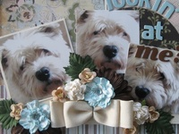 Scrapbooking pages about Pets found on Pinterest
