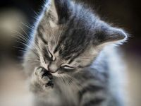 Pictures to warm your heart and help us be better at caring for animals
