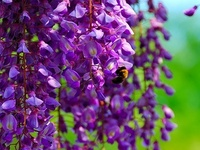 Purple Passion & Lavender