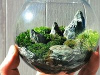 A multitude of different kinds of terrarium. I love tiny gardens  #marimo #airplants #succulents