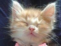 That's cute.  That's so cute!