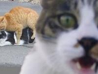 ....here kitty, kitty....