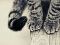 gatti / cats