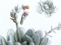 Sensational succulents in #gardens and #containers