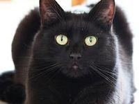 =^.^= I Love Cats =^.^=
