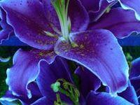 Amazing, beautiful flowers!