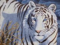 Art - Wildlife - Wild Cats