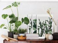 Green jardinage balcon jardin vert éclogie terrarium Tutoriel custo DIY