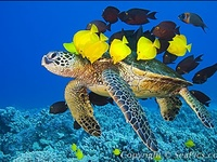 Ocean & Sea Life