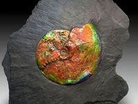 Gems, rocks, fossils....