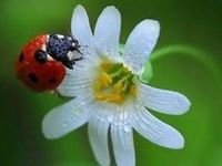 I love ladybugs (also called ladybirds).