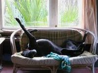 Greyhounds mostly - but hounds will do.