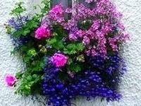 Yard/Garden Ideas