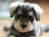 Cute and Lovely Animals