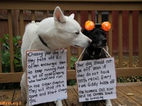 Helpful Hints for Animal Lovers