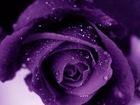 I love anything purple...